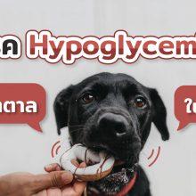 hypoglycemia ภาวะน้ำตาลในเลือดต่ำ
