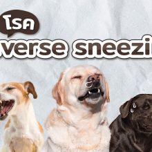 reverse sneezing ในสุนัข