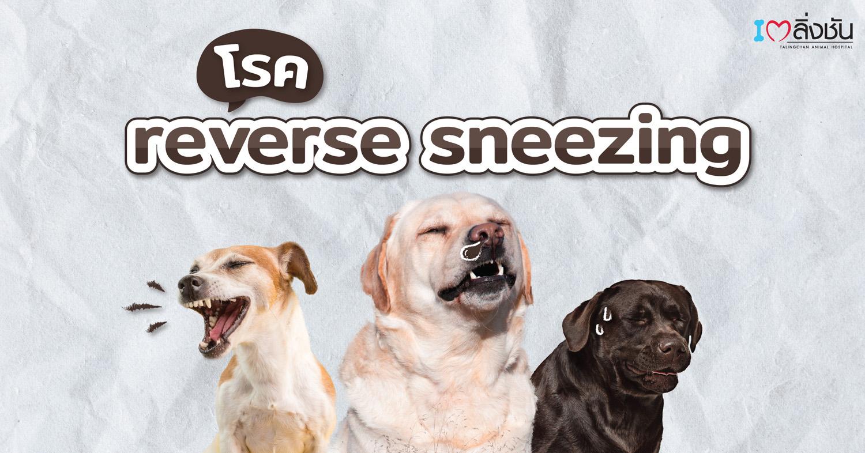 reverse sneezing