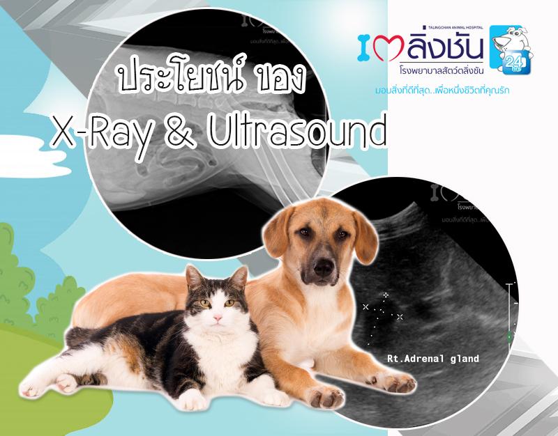 ประโยชน์ของxray_ultrasound_big