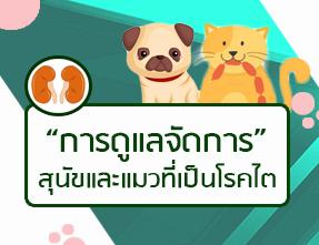 การดูแลจัดการสุนัขและแมวที่เป็นโรคไต