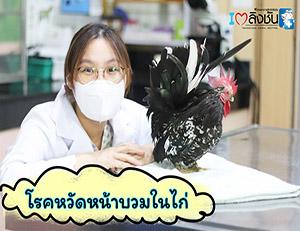 โรคหวัดหน้าบวมในไก่
