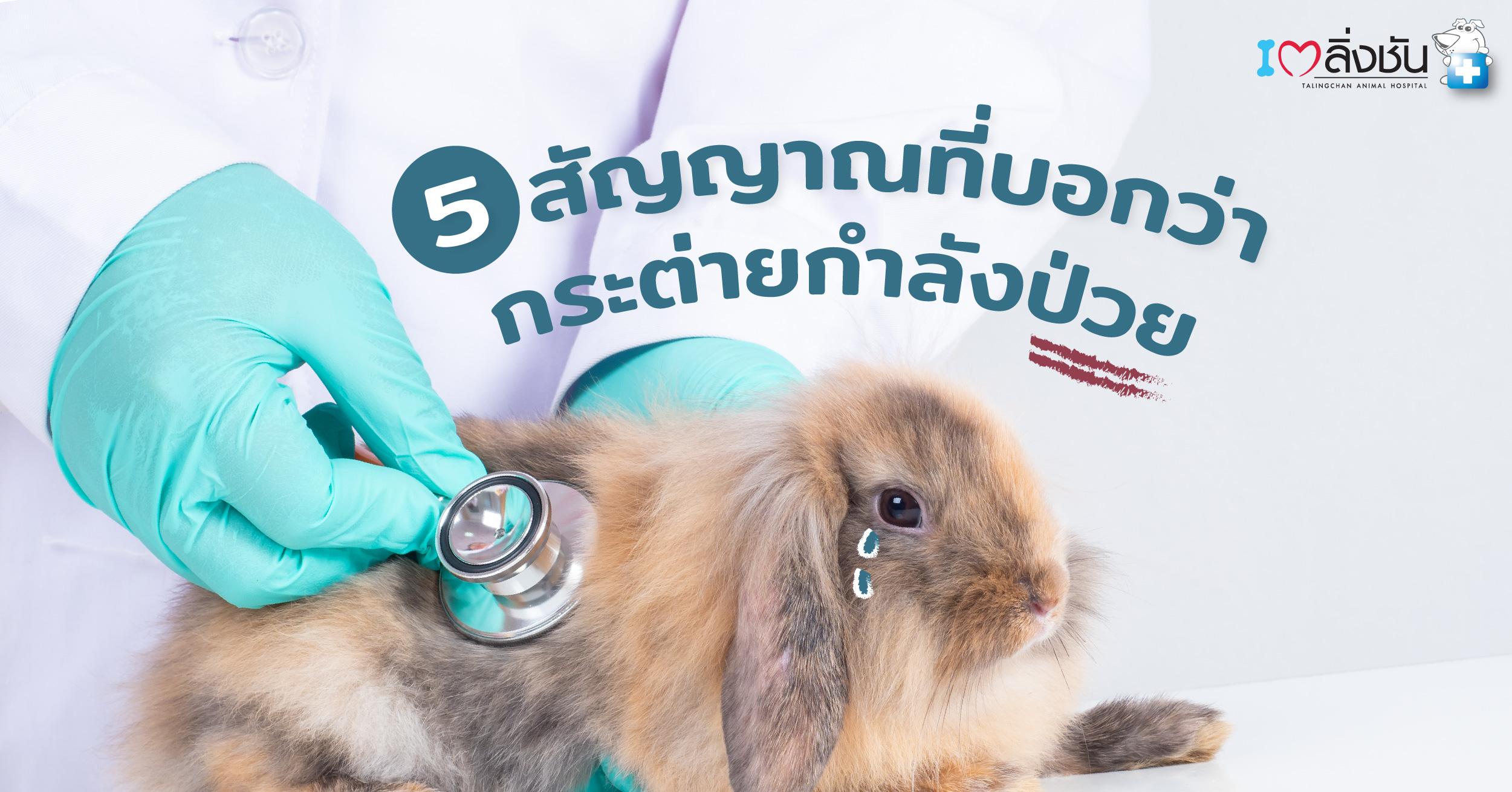 ปกอินโฟกระต่ายป่วย-02-02