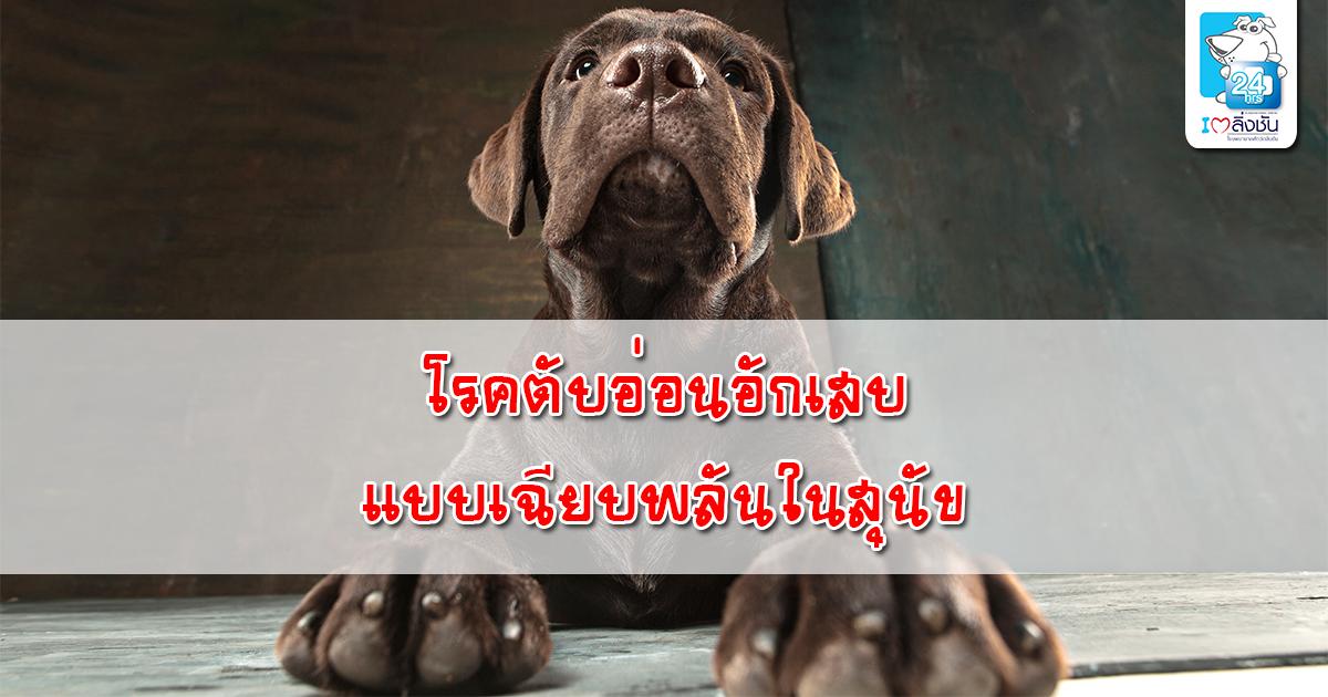 โรคตับอ่อนอักเสบแบบเฉียบพลันในสุนัข-1