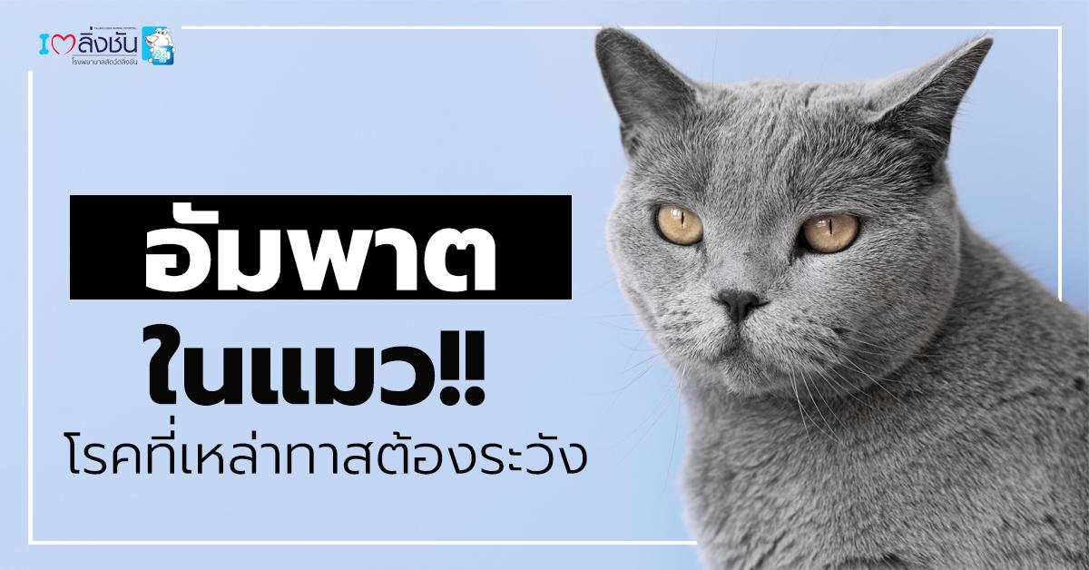 อัมพาตในแมว