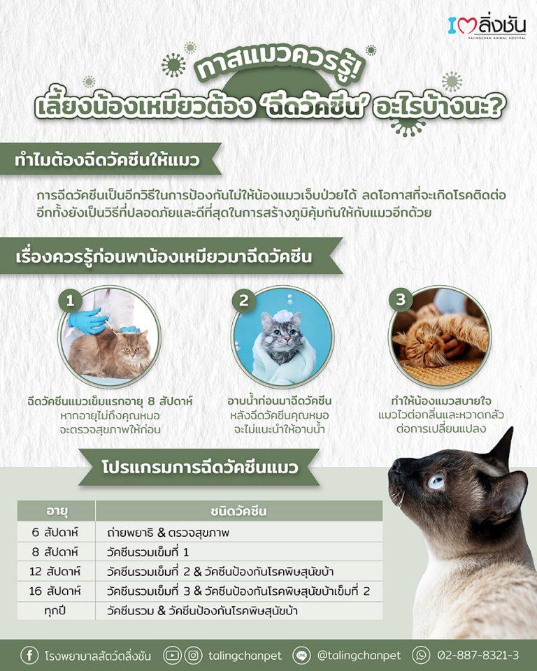 เลี้ยงแมว 1 ตัวต้องฉีดวัคซีนอะไรบ้าง