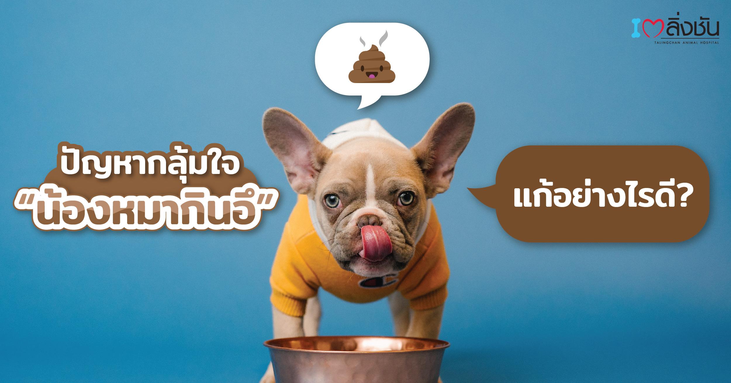 หมากินอึ-02