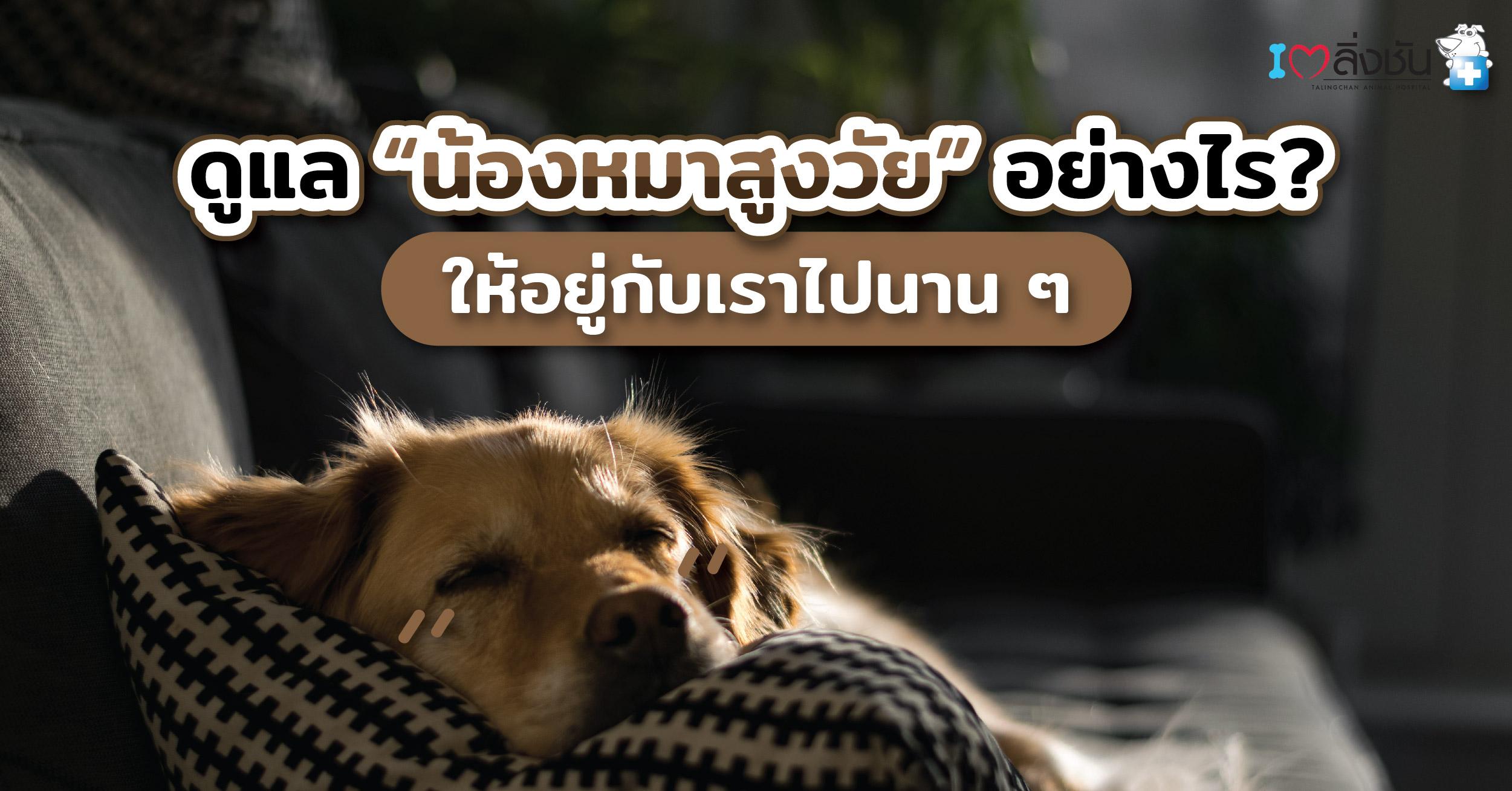 ดูแลหมาสูงวัย-02