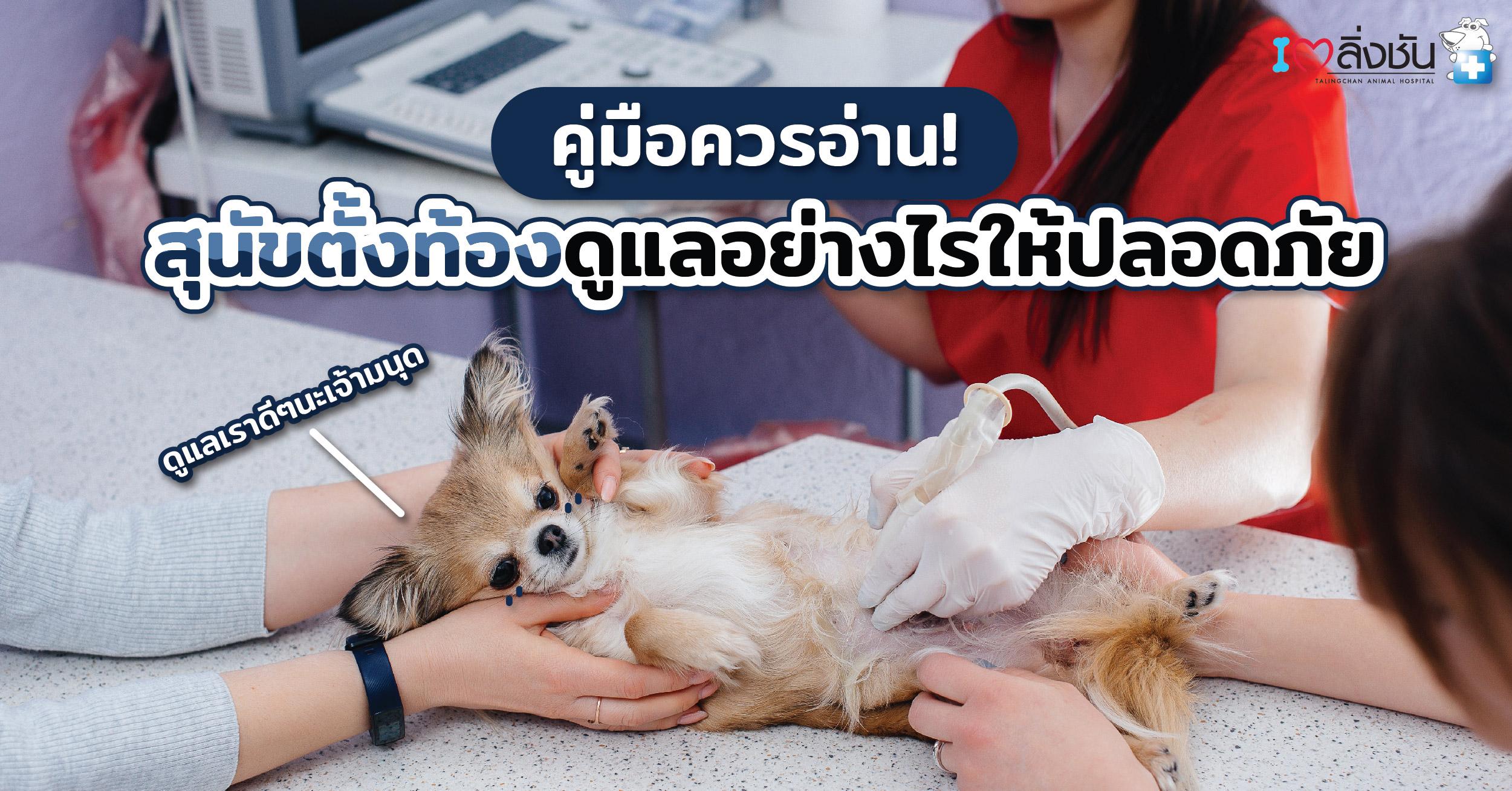 สุนัขท้อง-02