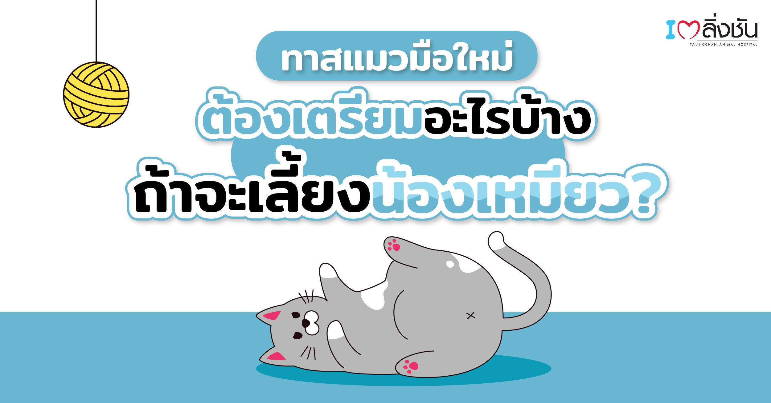 เลี้ยงแมวต้องเตรียมอะไรบ้าง