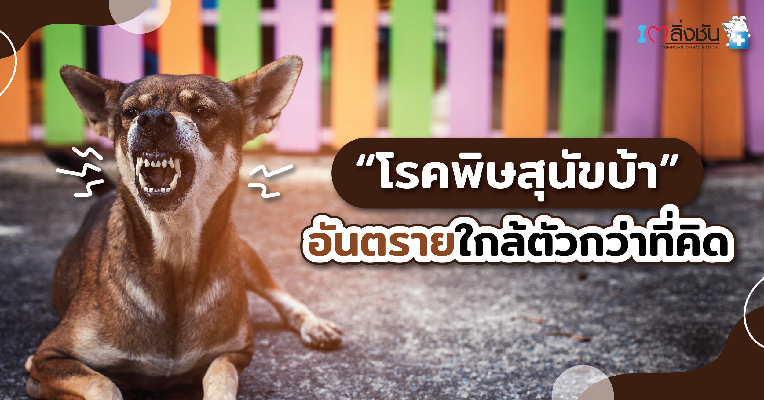 พิษสุนัขบ้า-03
